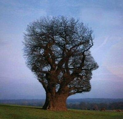 """Résultat de recherche d'images pour """"mise à nu de l'arbre"""""""